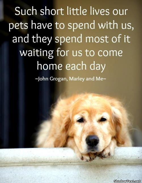 Waiting for Us to Come HomeDog Best Friend Quotes Tumblr